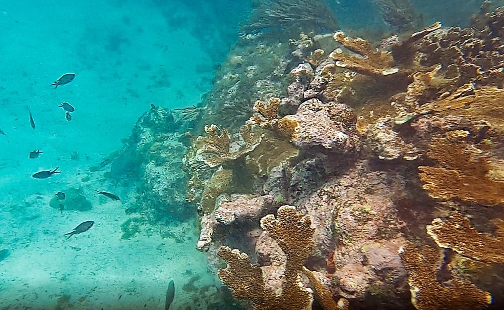 Capture 4.2 1 klein - De stranden van Curaçao die je niet mag overslaan