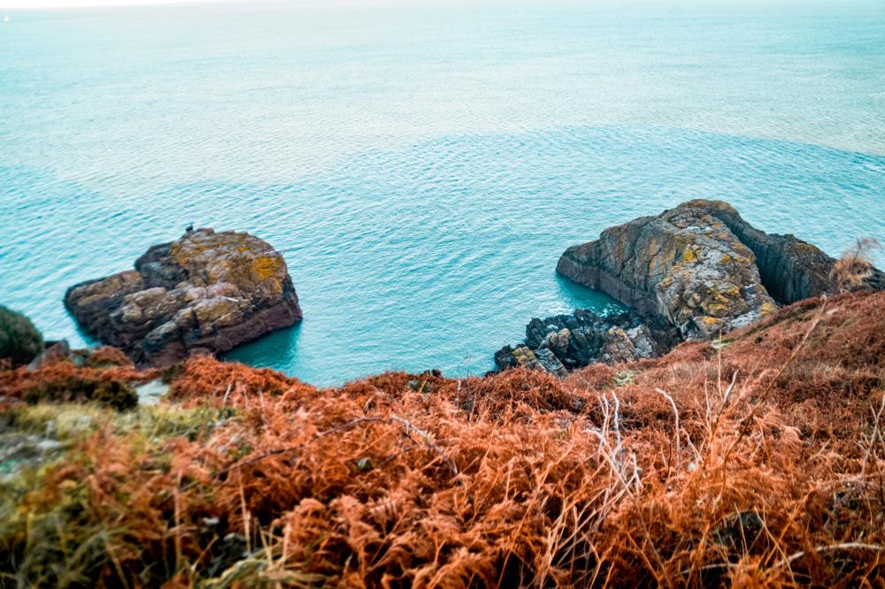 DSC02127 1 klein - Wandelen over de kliffen van Ierland: de Howth Cliff Walk