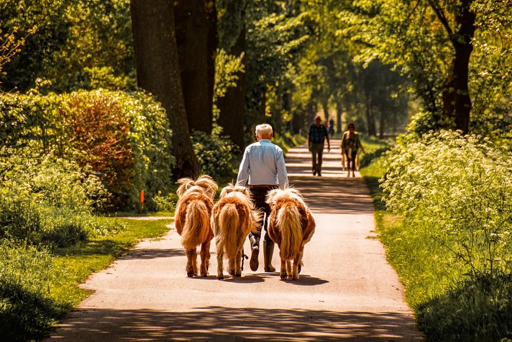 Wandelen Helenaveen klein 1 - Wandelroute Limburg: door de Mariapeel bij Helenaveen