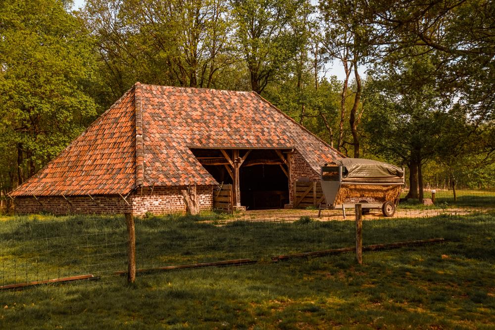 Wandelroute Mariapeel klein 1 - Wandelroute Limburg: door de Mariapeel bij Helenaveen
