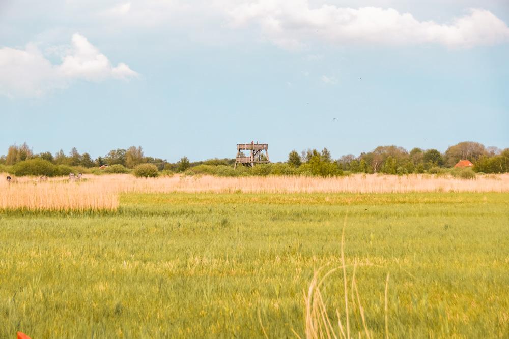 NP alde Feanen friesland 2 - De leukste dingen om te doen in Friesland