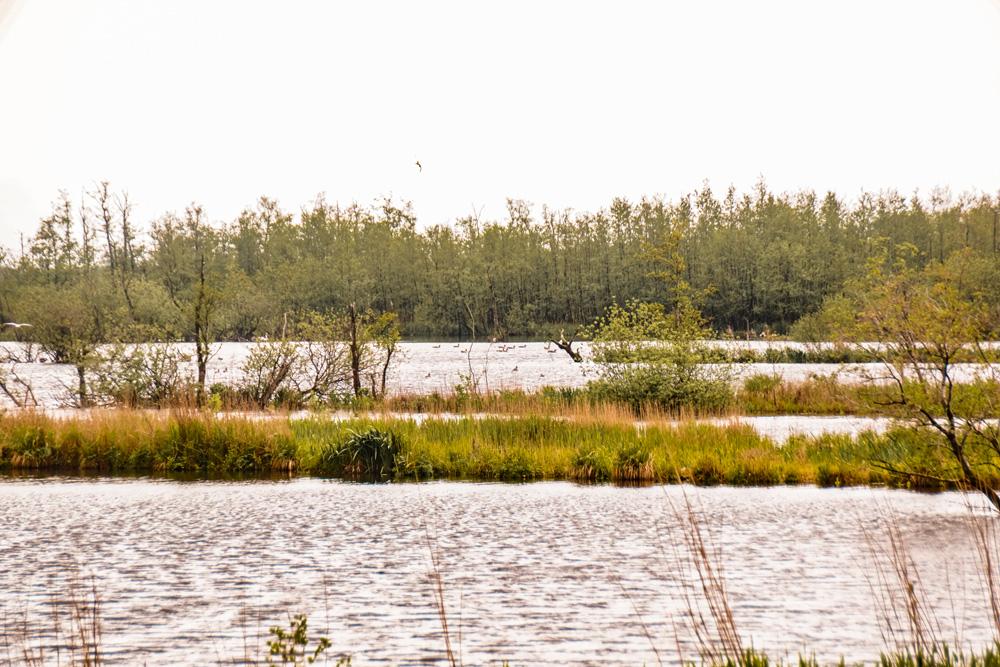 NP alde Feanen friesland - De leukste dingen om te doen in Friesland