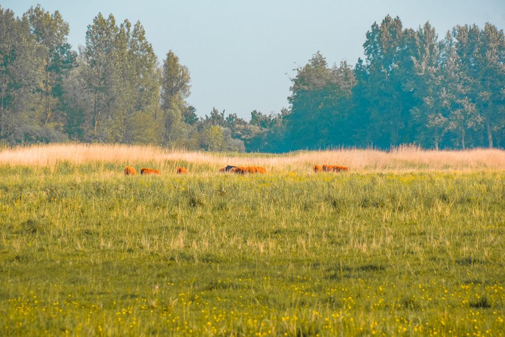 NP lauwersmeer friesland 2 - De leukste dingen om te doen in Friesland