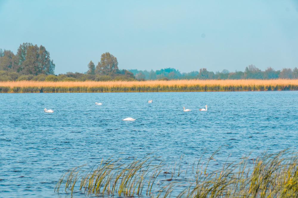 NP lauwersmeer friesland - De leukste dingen om te doen in Friesland