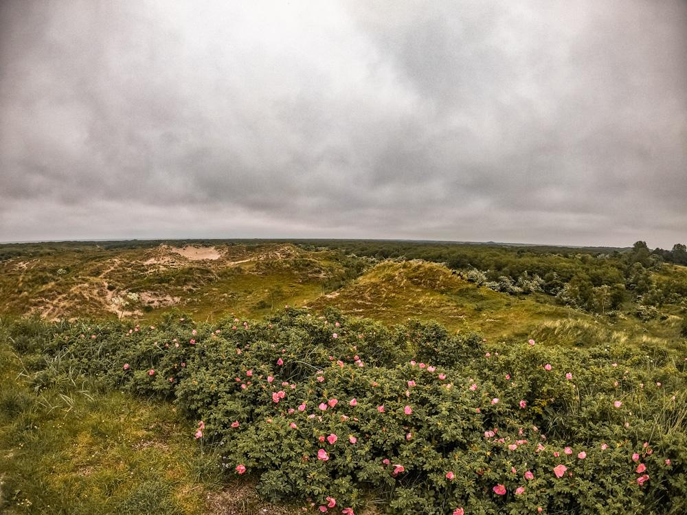 Schiermonnikoog 2 - De leukste dingen om te doen in Friesland