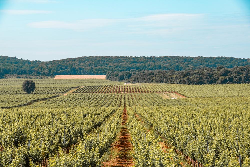 Wijngaarden Kroatie 2 - Kroatië: het land van leuke vissersdorpjes en prachtige watervallen