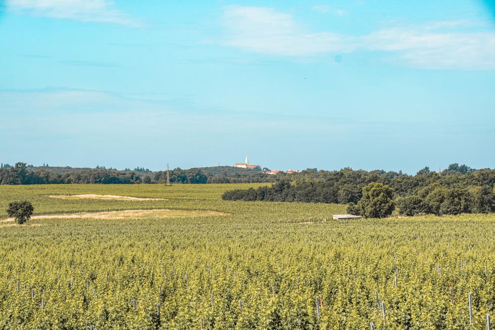 Wijngaarden Kroatie - Kroatië: het land van leuke vissersdorpjes en prachtige watervallen