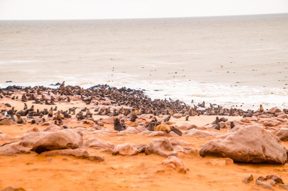 Namibie bezienswaardigheden Cape Cross 4 - Reisroute: langs de bezienswaardigheden van Namibië
