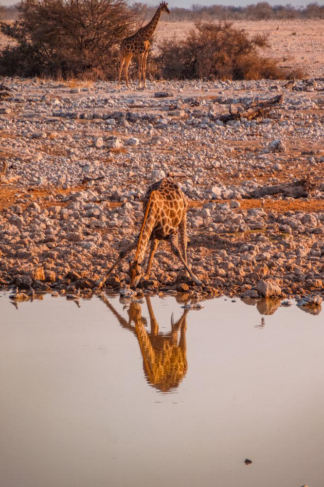 Namibie bezienswaardigheden Etosha Nationaal Park 3 - Reisroute: langs de bezienswaardigheden van Namibië