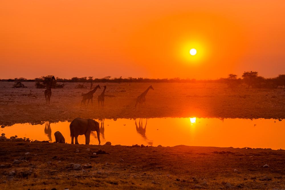 Namibie bezienswaardigheden Etosha Nationaal Park 4 - Reisroute: langs de bezienswaardigheden van Namibië