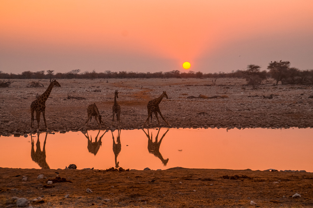 Namibie bezienswaardigheden Etosha Nationaal Park 5 - Reisroute: langs de bezienswaardigheden van Namibië