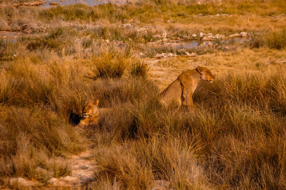 Namibie bezienswaardigheden Etosha Nationaal Park 6 - Reisroute: langs de bezienswaardigheden van Namibië