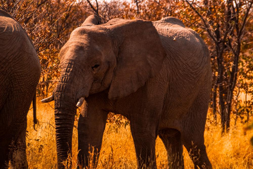 Namibie bezienswaardigheden Etosha Nationaal Park 7 - Reisroute: langs de bezienswaardigheden van Namibië