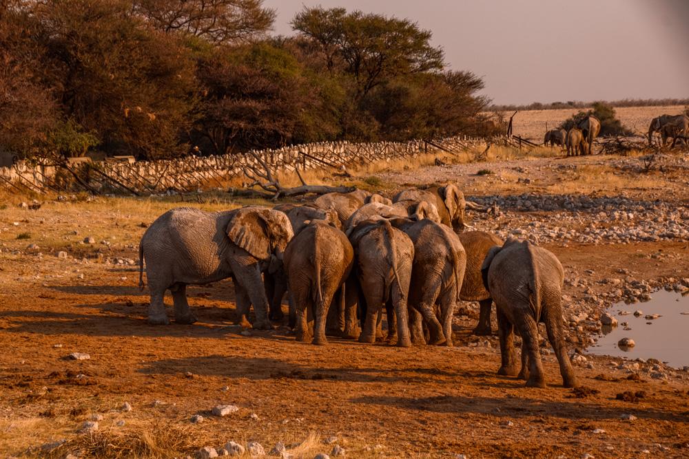 Namibie bezienswaardigheden Etosha Nationaal Park - Reisroute: langs de bezienswaardigheden van Namibië