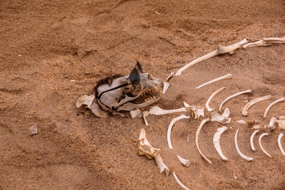 Namibie bezienswaardigheden Skeleton Coast 2 - Reisroute: langs de bezienswaardigheden van Namibië