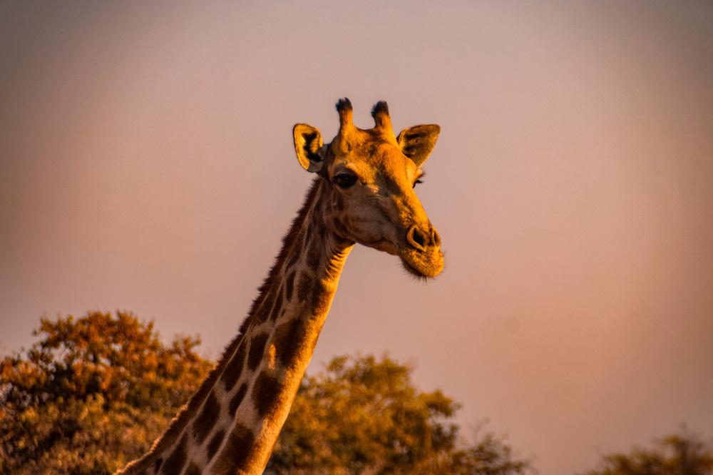 Namibie bezienswaardigheden Waterberg Plateau 2 - Reisroute: langs de bezienswaardigheden van Namibië